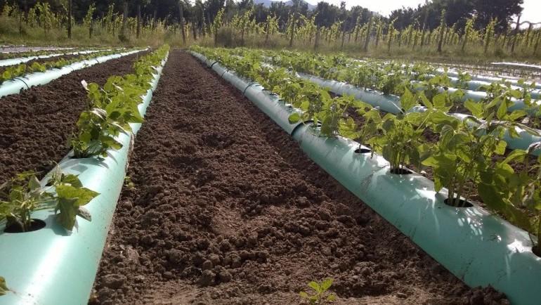 Come allestire il tuo orto in modo semplice riutilizzabile per i vostri ortaggi in pieno campo e in serra.