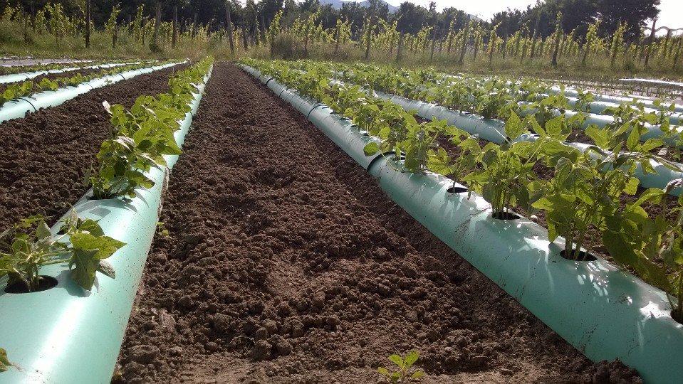 Tunnel Plastica Per Ortaggi.Tunny It Un Modo Nuovo Di Fare Agricoltura Aiutando L Ambiente